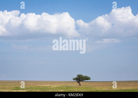 Acacia tree against a cloudy sky in the Serengeti, Tanzania, Africa - Stock Photo
