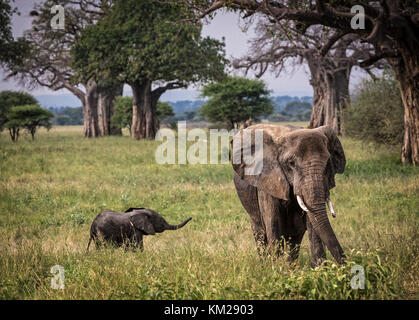 African Elephant with baby in the Serengeti, Tanzania, Africa - Stock Photo