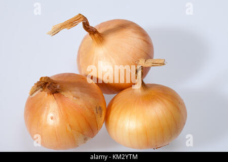 Onions isolated over white background - Stock Photo