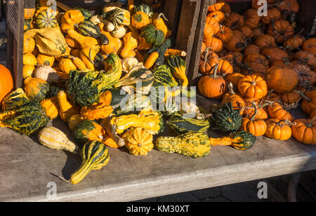 A variety of gourds and small pumpkins at the farmers market in Union Square, New York City - Stock Photo