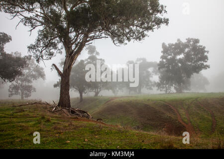 A cold foggy morning in country New south Wales - Stock Photo