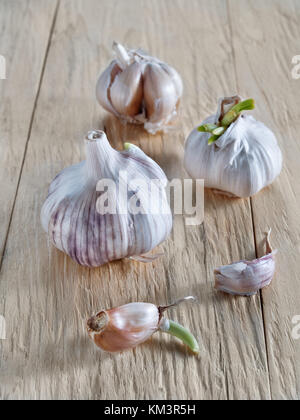 Fresh garlic and garlic with green sprouted sprouts and cloves of garlic lie on a wooden background untreated seasoning - Stock Photo