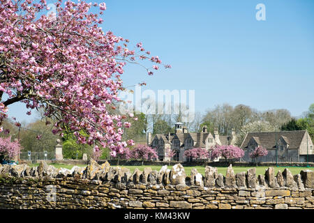 Pink blossom on a cherry tree, above a Cotswold dry stone wall with a view across the cricket pitch in Corsham, - Stock Photo