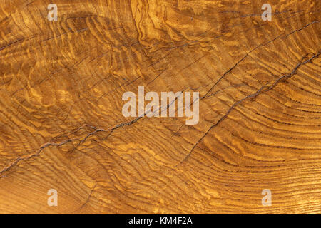 Close Up of felled Oak Tree , showing the incredible detail of the Wood Grain and growth rings on the tree trunk - Stock Photo