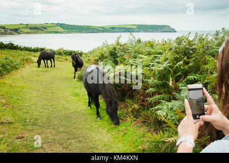 A woman taking a photograph of three wild ponies on a path grazing on bracken, on the coast. - Stock Photo