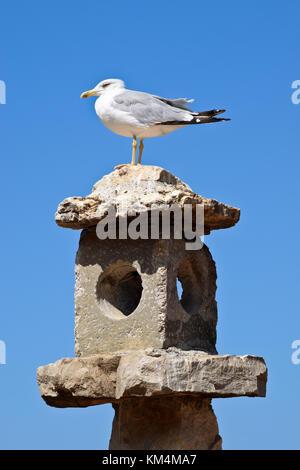 European Herring Gull Sitting Down on the Chimnery. - Stock Photo