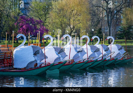 Morning photograph of the swan boats and water reflections at the Boston Public Garden in the spring with the first - Stock Photo