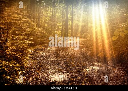 Sunbeams Forest Path. Sunbeams illuminate a winding lane through the woods of Michigan with copy space in the foreground. - Stock Photo