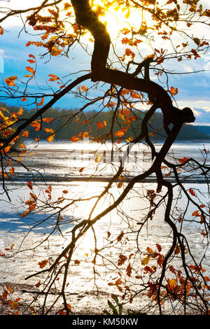 podzimní krajina, Jižní Čechy, Ceska republika / autumnal landscape, South Bohemia, Czech Republic - Stock Photo