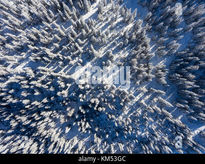 Forest covered with snow - Aerial photo - Stock Photo
