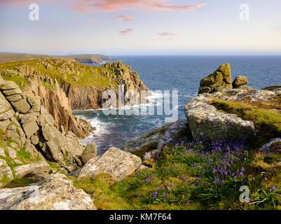 Atlantisches Hasenglöckchen (Hyacinthoides non-scripta), Steilküste, Land's End, Cornwall, England, Großbritannien - Stock Photo