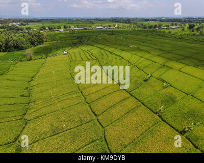rice paddy terrace in Tabanan Bali - Stock Photo