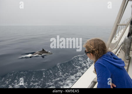Girl looking at dolphins swimming in ocean, California, America, USA - Stock Photo