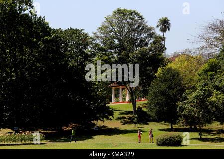 Peradeniya  Kandy Central Province Sri Lanka Peradeniya Royal Botanical Gardens - Stock Photo