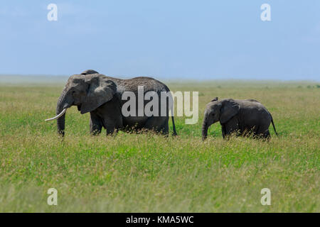 African elephant mother with a calf - Stock Photo
