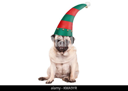 grumpy faced pug puppy dog with elf hat for Christmas, sitting down, isolated on white background - Stock Photo