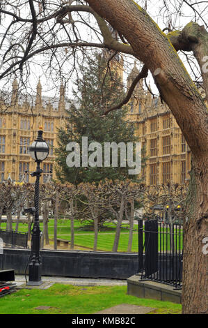 an unusual view of the houses of parliament or the palace of Westminster with a huge large Christmas tree in the - Stock Photo