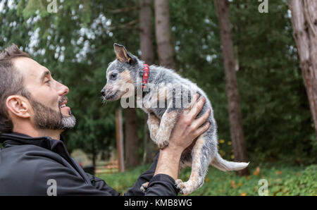 Man holding 'Lilly', his 10 week old Australian Cattledog puppy in Issaquah, Washington, USA. - Stock Photo