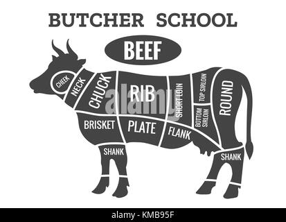 Cow butcher diagram. Cutting beef meat or steak cuts diagram chart for restaurant poster vector illustration
