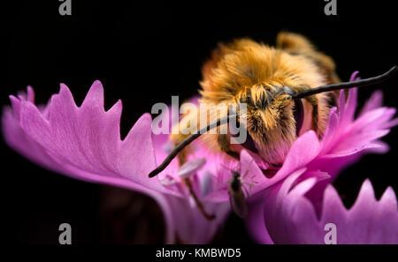 Bee on the purple flowr - Stock Photo