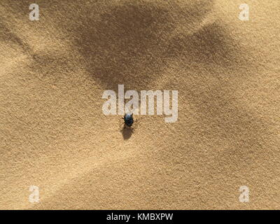 small black dung beetle walking on the sand - Stock Photo