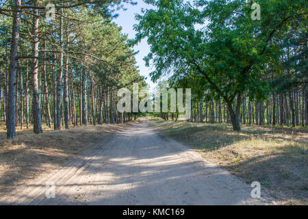 The road in the pine forests stretches very far. Beautiful landscape - Stock Photo