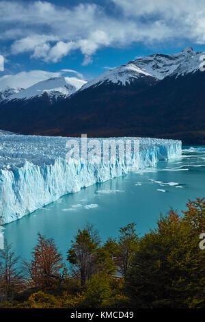 Perito Moreno Glacier, and lenga trees in autumn, Parque Nacional Los Glaciares (World Heritage Area), Patagonia, - Stock Photo