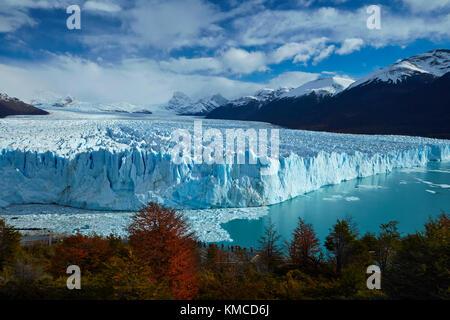 Perito Moreno Glacier, lenga trees in autumn, and tourists on walkway, Parque Nacional Los Glaciares (World Heritage - Stock Photo