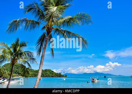Beautiful tropical coconut palm trees at Thailand beach of Samui island, famous vacation destination - Stock Photo