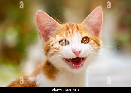 Smiling baby kitten with wonderful eyes miaows with mouth open, cat portrait, Chios, Greece. - Stock Photo