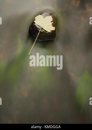 Fallen maple leaf in stream. Cold water is running over dark boulders and bubbles create on level milky water. Colorful - Stock Photo
