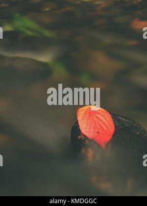 Red leaf of raspberries. Broken red orange leaf caught on black stone in stream  rapids.  Silver lines of bubbles - Stock Photo