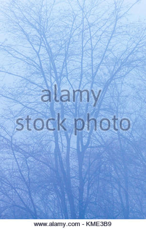 Pattern of trees in a thick heavy blue fog in Bluffer's Park beside Lake Ontario in Toronto Ontario Canada - Stock Photo
