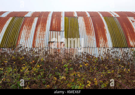 corrugated metal building in rural setting, norfolk, england - Stock Photo