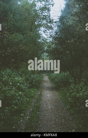 Morning in forest. Path back to home. - Stock Photo