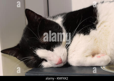 Black and white cat sleeping on a book - Stock Photo