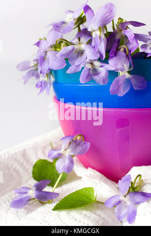 Common Dog Violet - Viola riviniana - spring flower in a decorative bowl - aromatic home decor - aromatherapy - Stock Photo