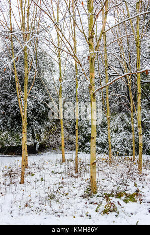 Highgate, London, UK. 10th December 2017. Snow causes travel disruption but brings festive atmosphere to Highgate - Stock Photo