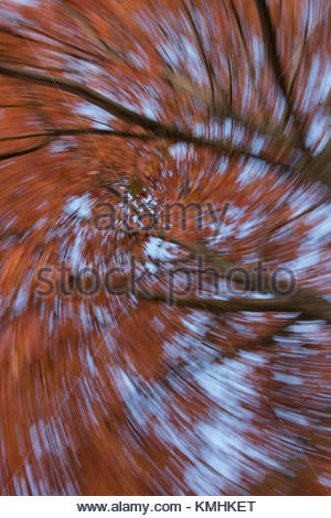 Two Autumn Trees in Abstract - Stock Photo
