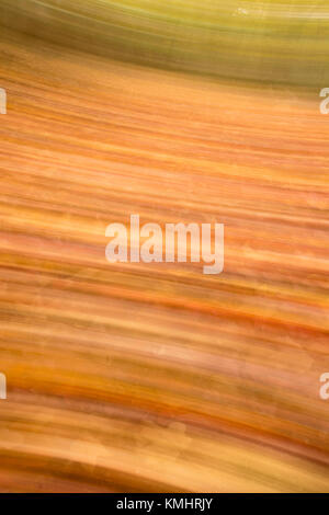 Blur Motion of Autumn Leaves on Forest Floor - Stock Photo
