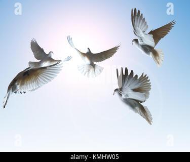White Dove Flying In Sun Rays Against Dark Blue Sky Symbol Of Peace