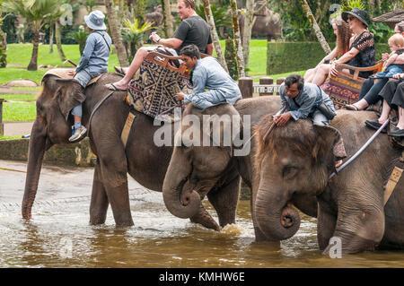 Tourists and handlers riding rescued Sumatran elephants at the Elephant Safari Park at Taro, Bali, Indonesia - Stock Photo