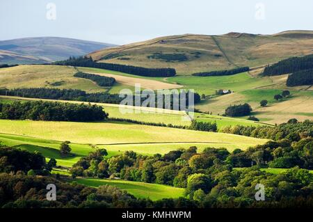 Farmland on Yair Hill one mile northwest of Selkirk. Borders Region, Scotland. On the Southern Upland Way long distance - Stock Photo