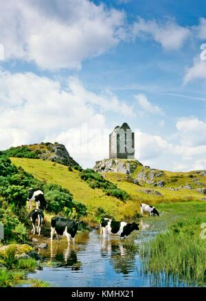 Smailholm Tower fortified house pele tower in the Borders region of south Scotland UK United Kingdom. Dairy cattle - Stock Photo