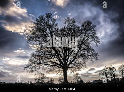 Oak Tree silhouetted against blue cloudy sky - Stock Photo
