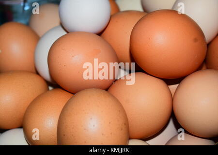Farm Fresh - Stock Photo