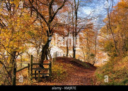 Autumn at Pulpit Wood, Chilterns AONB, Buckinghamshire, England, UK - Stock Photo