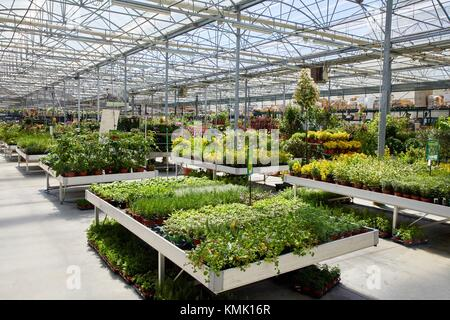 Garden center, Hondarribia, Gipuzkoa, Basque Country, Spain - Stock Photo