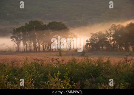 field and forest in the fog morning nature of the Far East of Russia - Stock Photo