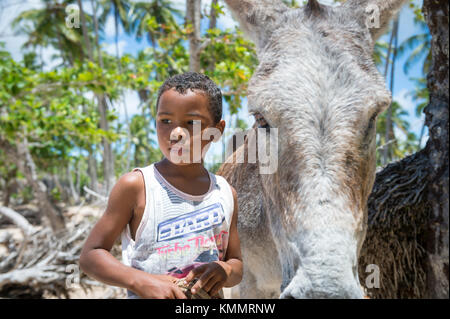 BAHIA, BRAZIL - MARCH 11, 2017: A mule stands with a young Brazilian boy on the palm-fringed shore of a Northeastern - Stock Photo